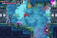 AQA Aquatic Environment MF