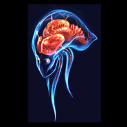 Metroid Prime Head Concept Art MP1