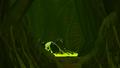 Metroid Samus Returns Metroid Husk Zeta Metroid Husk (Cutscene)
