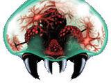 Metroid (specie)