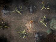 Escarabajos beta MP