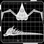 Parasite placeholder image 2