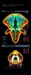 Escaneo del Metroid de Phazon (derecha) MP3.png