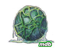 MetroidEgg.jpg