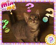 Mia-and-Me-Mimi-the-Kitten