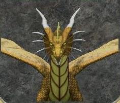 I am mt gold dragon dwarf golden dragon japanese maple
