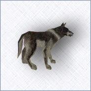 Grey wolf- MM IX