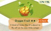 Dragon fruit very rare.jpg