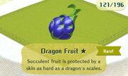 Dragon Fruit 1star.JPG