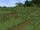 Double Tallgrass