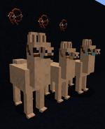 Leather bridles on llamas