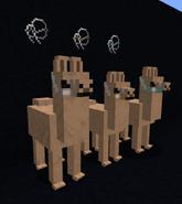 Cloth bridles on llamas