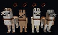 Leather collars on llamas