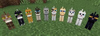 Cat Minecraft Wiki Fandom