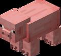 PigNew