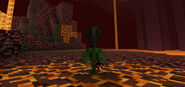 Wither-rose-2