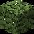 Folhas de Eucalipto.png