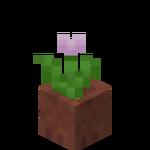 Růžový tulipán v květináči.png