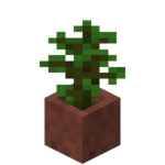 Sazenice tropického stromu v květináči.png