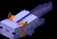 Blauer Axolotl schwimmt.png