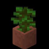 Eingetopfter Tropenbaumsetzling.png
