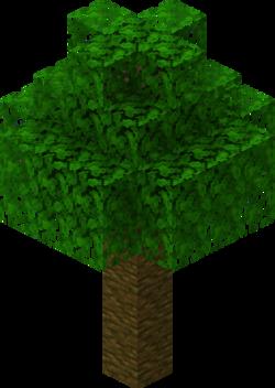Tropenbaum.png
