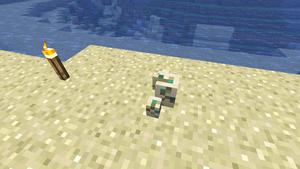Schildkrötenbrut5.png