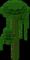 Riesentropenbaum.png
