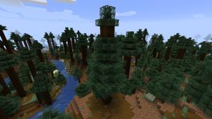 Baum Riesenfichte.png