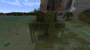 Baum Sumpfeiche.png