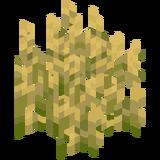 Weizenpflanzen.png
