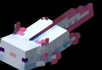 Türkiser Axolotl schwimmt.png