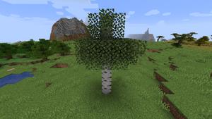 Baum Birke.png