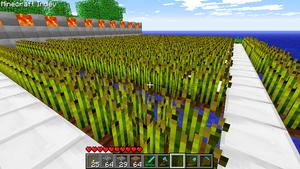 Tutoriales Cultivo De Trigo El Oficial Minecraft Wiki