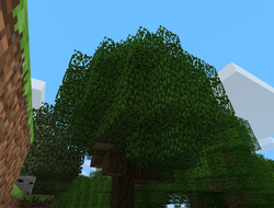 TreehouseTrees.png