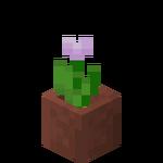 Tulipe rose en pot.png