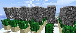 Ferme de cactus 3.jpg