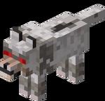 Loup agressif