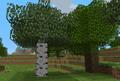 Bouleau et arbre classique.png