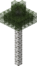 Tall Birch Tree.png