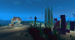 Coral reef at night.png
