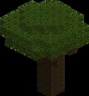Dark Oak Tree JE1 BE1.png