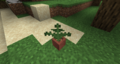 Forest Potted Fern.png