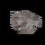 Dead Brain Coral Wall Fan (S) JE1.png