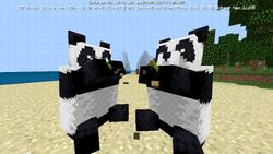 Pandas Eating BE.png