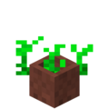 Potted Vegetables Age 2.png