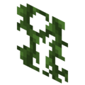 Birch Forest Vines.png