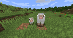 Adult and Baby Sheep.png