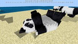 Playful panda on back.png