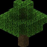 Oak JE12.png